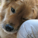 dog-sweet-Favim.com1_-300x225