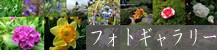 seishoji-banner-photo-g